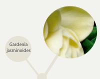 planta-linha-regeneracao-anti-idade-pagina-produto-anjelif