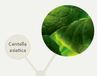 planta-linha-tratamento-corpo-pagina-produto-anjelif