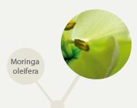 planta-pagina-produto-linha-limpeza-facial-anjelif