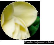 planta-regeneracao-anti-idade
