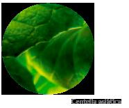 planta-tratamento-corpo